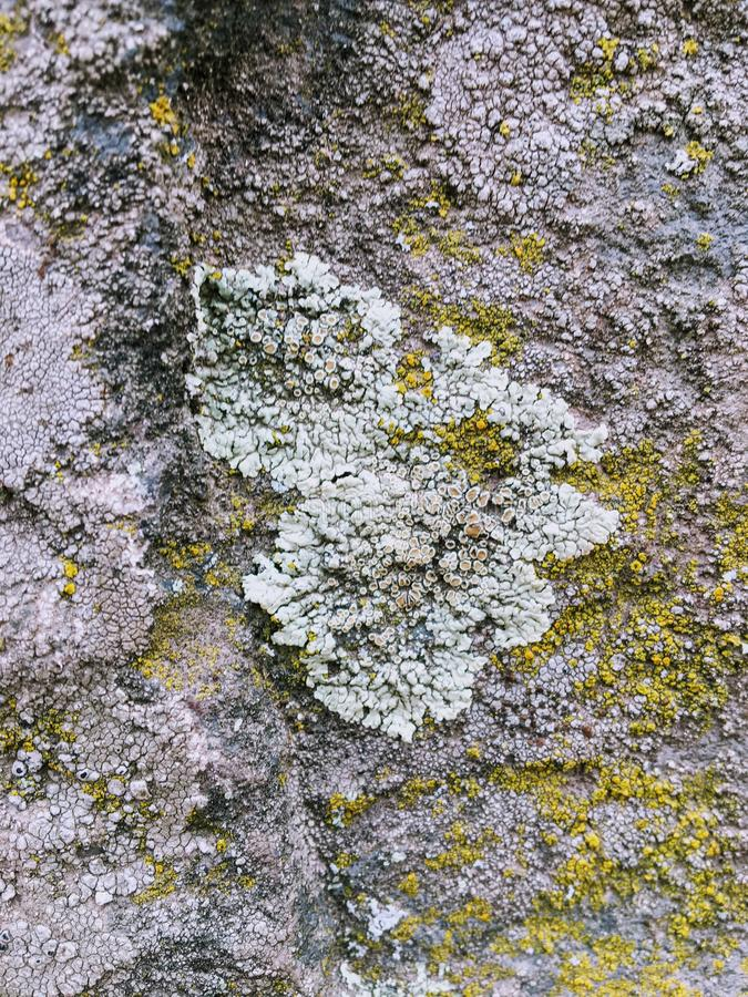 Gray, Green, Black, Lichen on rock, symbiotic combination of a fungus with an algae or bacterium, close up, macro in fall on the Y stock photo