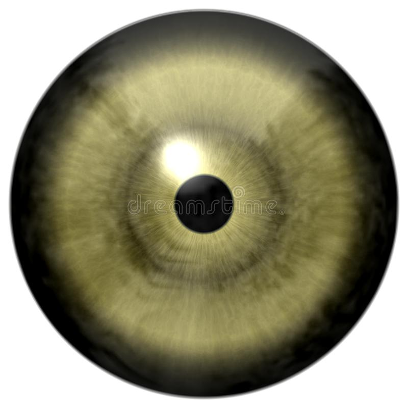 Gray green eye with white background, little black pupil, human and animal eyeball, great vision, colorized eyeball stock image