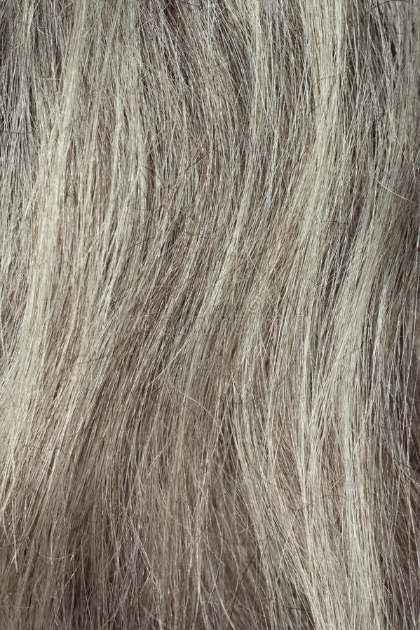 Gray Hair Closeup stock photo