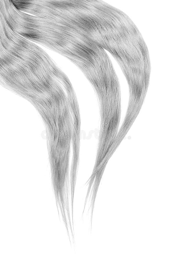 Gray hair isolated on white background. Long disheveled ponytail. Natural healthy hair isolated on white background. Detailed clipart for your collages and stock image