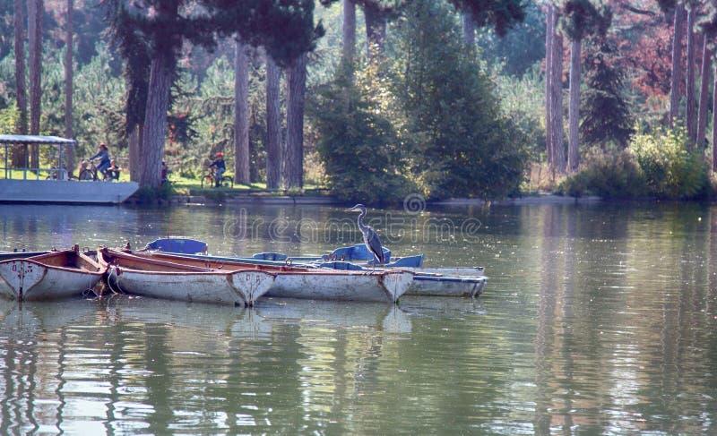 Gray Heron que descansa sobre los barcos de placer fotografía de archivo