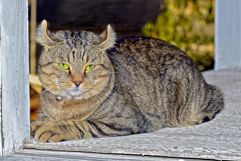 Cat Sitting on Porch of an Old House stock photo