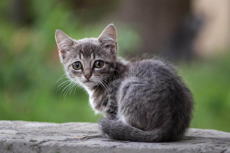 A gray homeless kitten is sad. The cat does not have hosts, therefore, misses and waits for food. On the background - green summer potions, grass and garden royalty free stock image