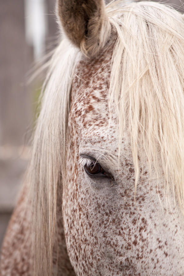 Download Gray horse eye stock photo. Image of mane, horse, look - 19895694