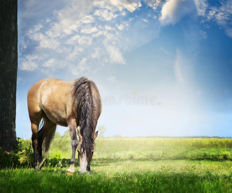 Gray horse grazes on summer or spring pasture against backdrop of beautiful blue sky with clouds royalty free stock photos