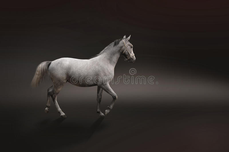 Gray horse isolated on black stock images