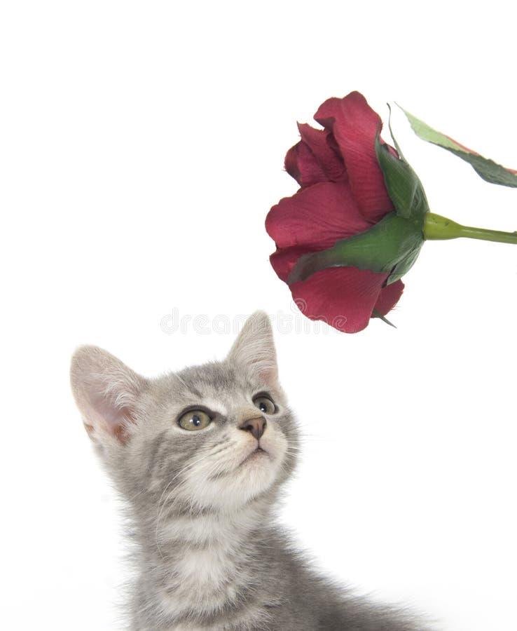 Gray kitten and flowers stock photo