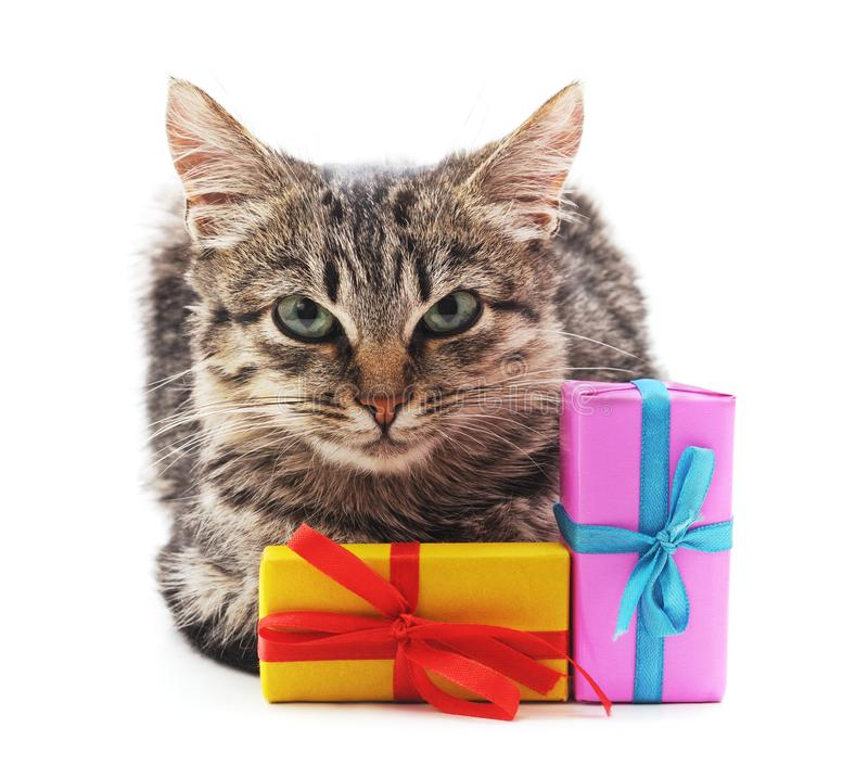 Gray kitten with a gifts. On a white background stock photography