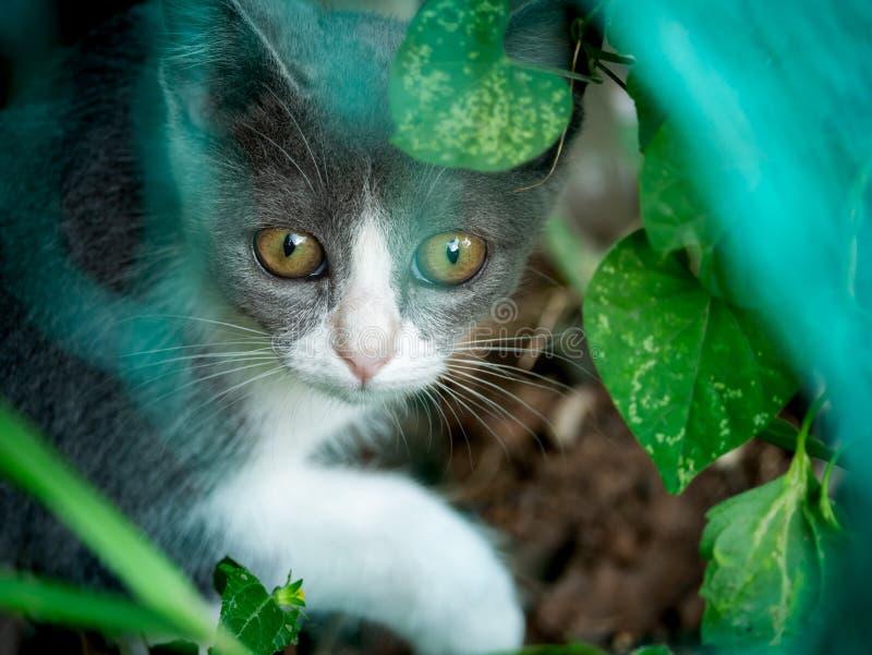 Gray Kitten Hiding en el jardín fotografía de archivo libre de regalías