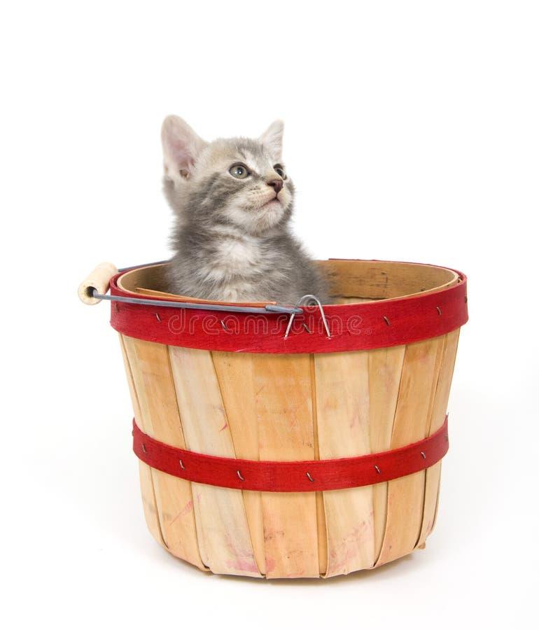 Free Gray Kitten In Apple Basket Royalty Free Stock Image - 3579106