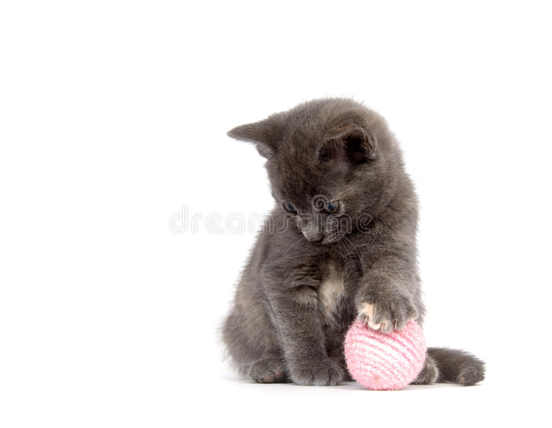 Gray kitten playing with pink ball. A gray kitten plays with a pink ball on a white background stock images