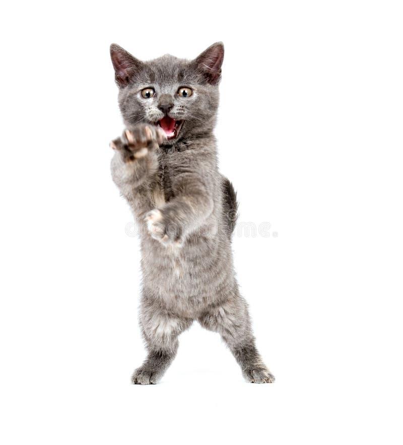Gray kitten pouncing stock photos