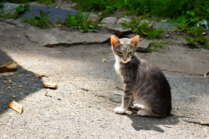Gray kitten sitting on an alley. royalty free stock photography