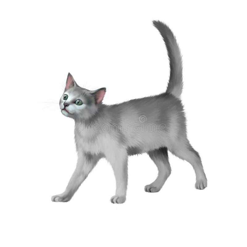 Gray kitten walks against white background royalty free illustration