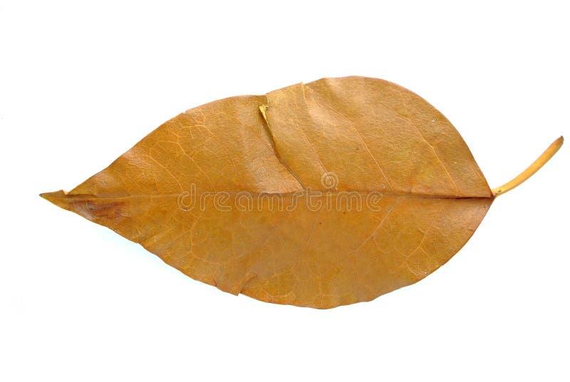 Gray Leaf imagenes de archivo