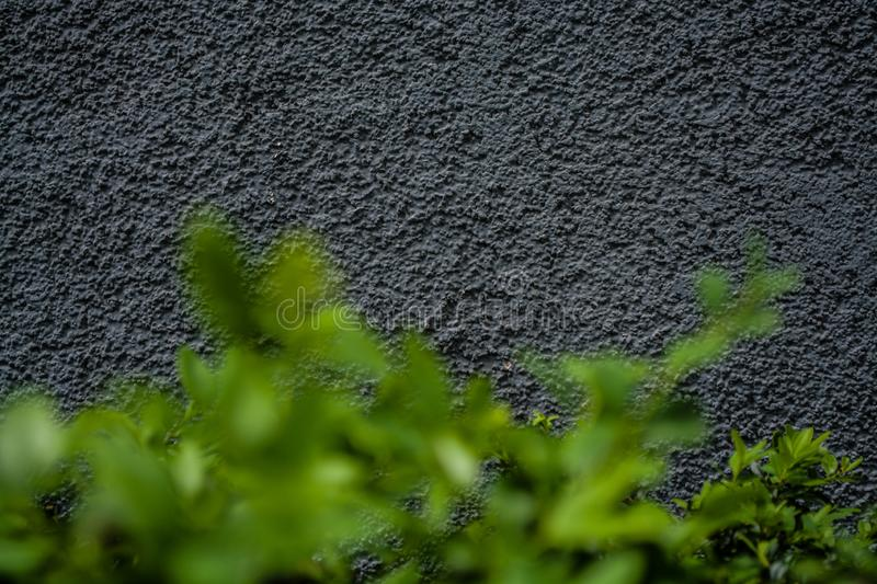 Gray monophonic background or texture with roughness. Blue shade. Plaster on a wall. Bright green leaves of bushes. stock photo