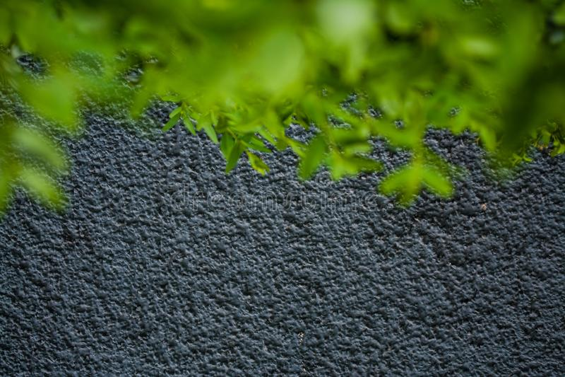 Gray monophonic background or texture with roughness. Blue shade. Plaster on a wall. Bright green leaves of bushes. stock photos