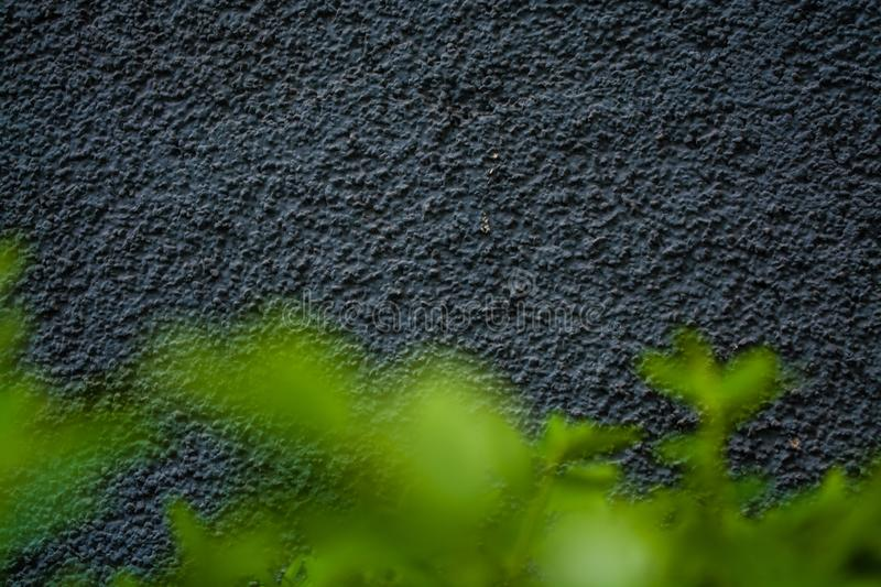 Gray monophonic background or texture with roughness. Blue shade. Plaster on a wall. Bright green leaves of bushes. stock image