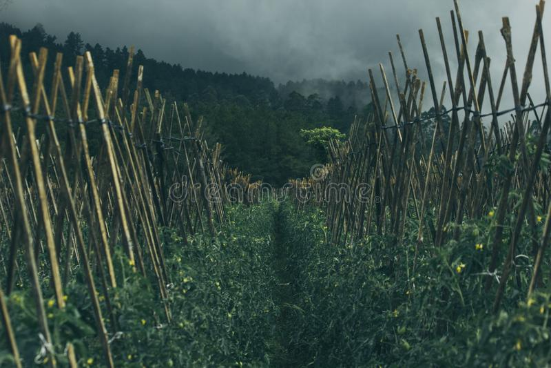 Gray Nimbus Clouds over Farm Field royalty free stock photos