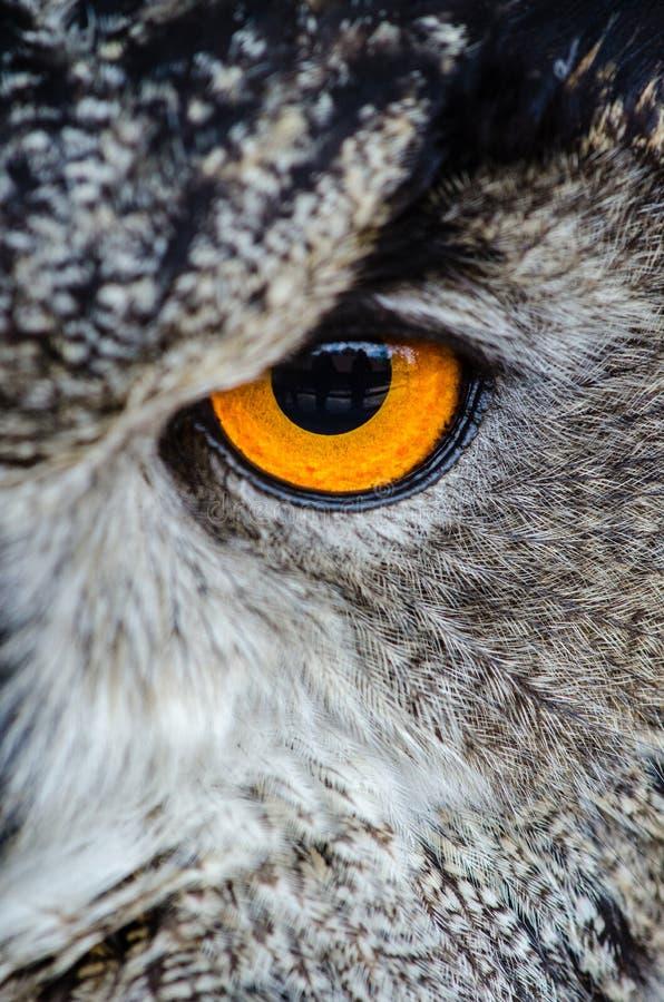 Gray Owl Showing Orange And Black Left Eye Free Public Domain Cc0 Image