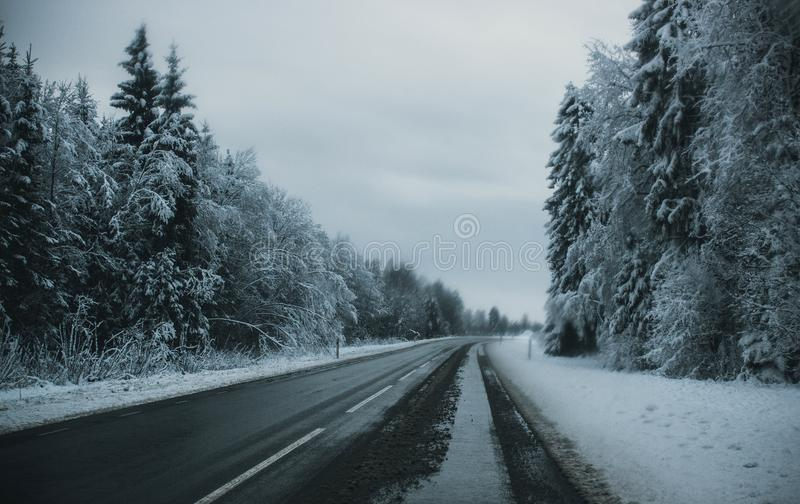 Gray Pave Road Between Tall Trees Covered on Snow stock photo