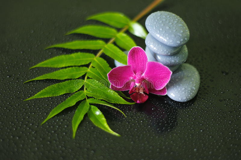 Gray pebbles arranged in zen lifestyle with an orchid, a branch of heather and drops of water on a glossy black background royalty free stock image