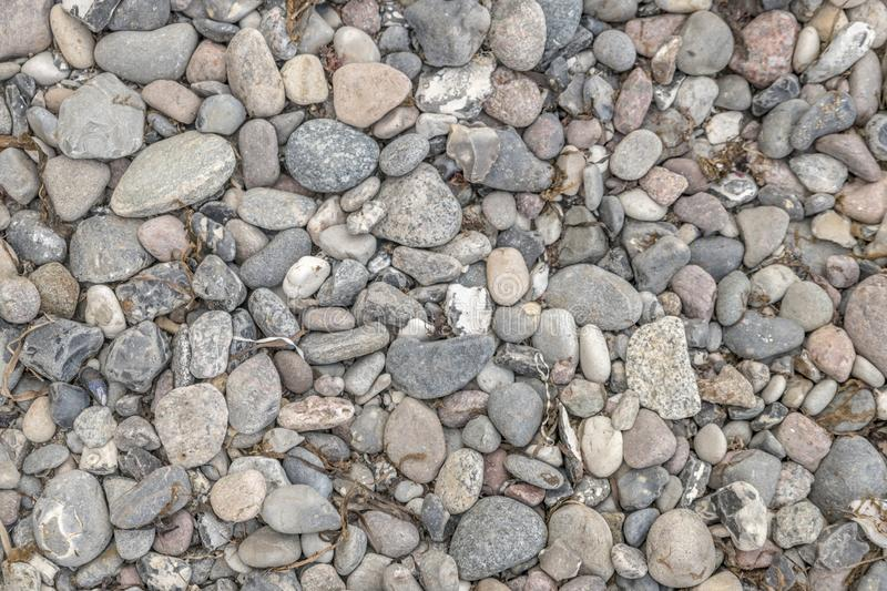 Gray pebbles on the sea beach with dried seagrass and algae deposits. As background stock image