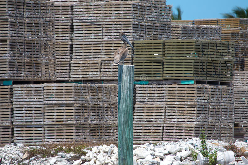 Gray pelican (pelecanus philippensis) on a wooden post against t. He backdrop of fishing cages royalty free stock photography