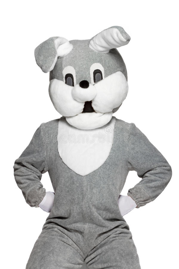 Funny plush rabbit isolated on white background stock images