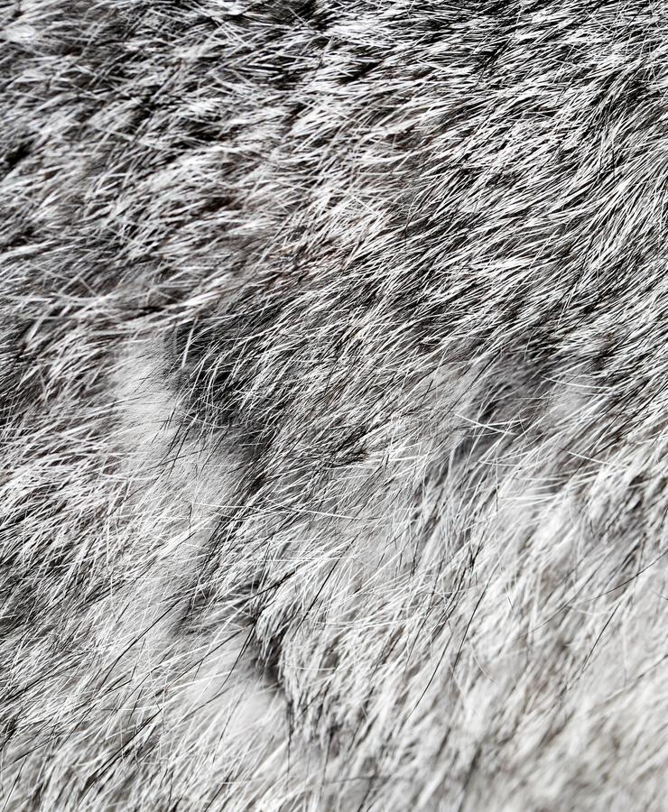Gray rabbit fur as background stock images