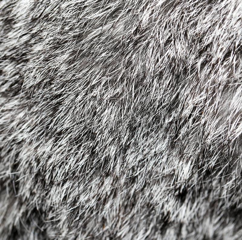 Gray rabbit fur as background stock photography
