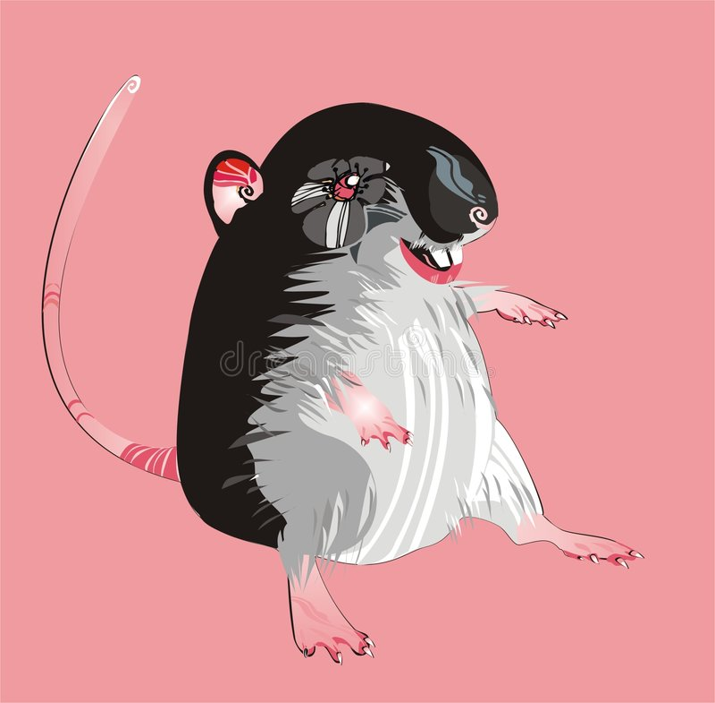 Gray rat royalty free stock photography