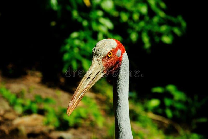 Gray Red Bird Near Trees Free Public Domain Cc0 Image