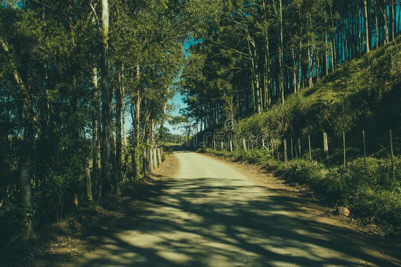 Gray Road in the Middle of the Forest during Day Time royalty free stock photography