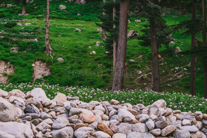 Gray Rock Near Green Grass Lawn and Tall Trees royalty free stock images