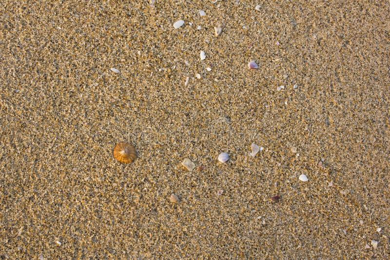 A Gray sand closeup with shells. natural surface texture royalty free stock photography