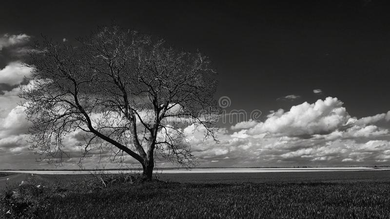 Gray Scale Photo of Leafless Tree Under Cloudy Sky stock photo