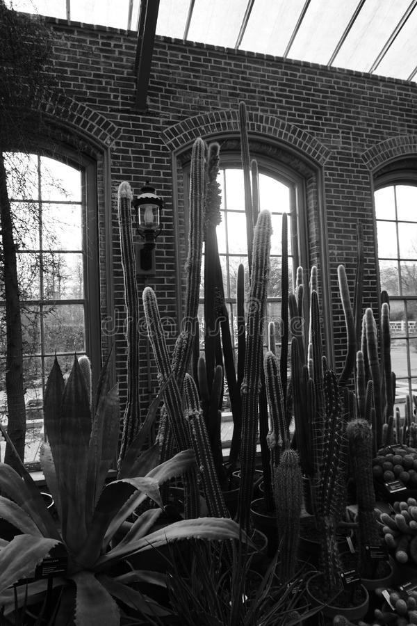 Gray Scale Photo of Plants Indoor royalty free stock photos
