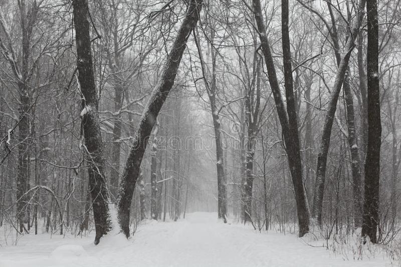 Gray Scale Photo of Trees on Snow stock photos
