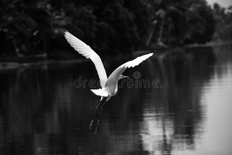 Gray Scale Photography of Bird stock photo