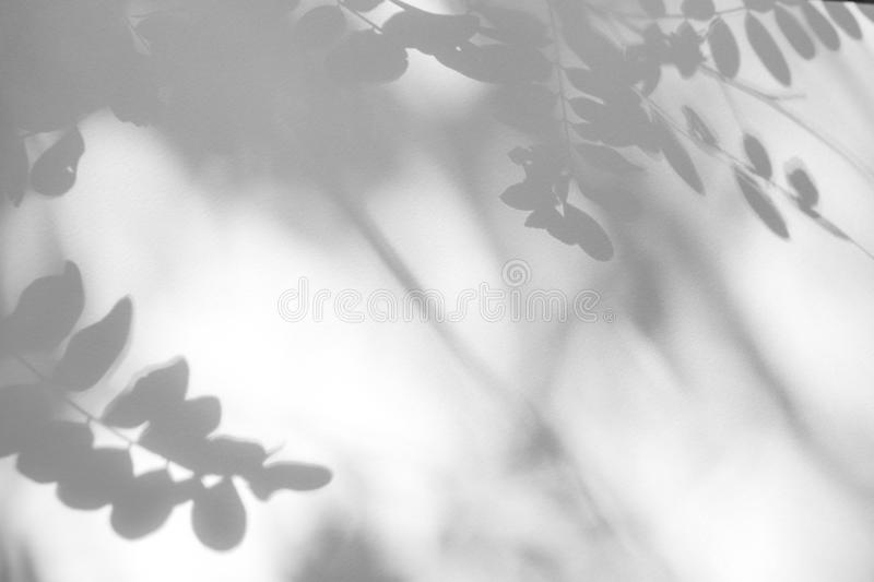 Gray shadow of the leaves on a white wall royalty free stock photos
