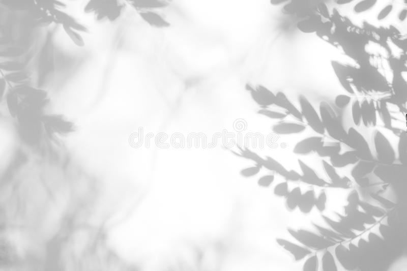 Gray shadow of the leaves on a white wall stock images