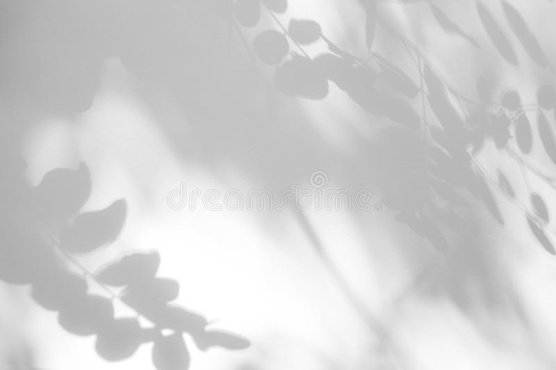 Gray shadow of the leaves on a white wall stock photo
