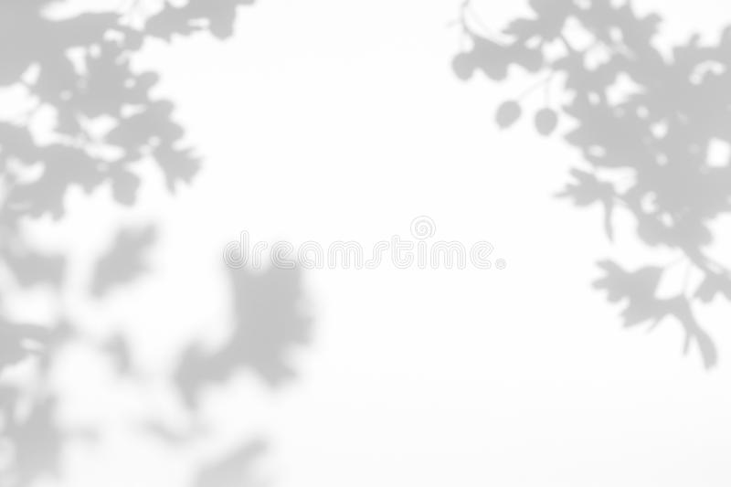 Gray shadow of the leaves on a white wall stock image