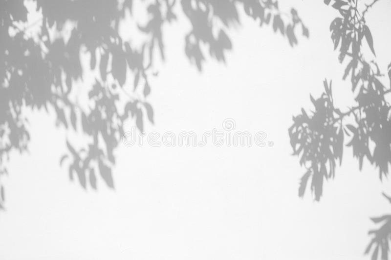 gray shadow of the leaves on a white wall royalty free stock images