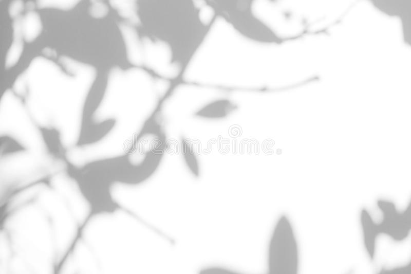 Gray shadow of the leaves on a white wall. Overlay effect for photo. Gray shadow of the leaves on a white wall. Abstract neutral nature concept blurred royalty free stock photography