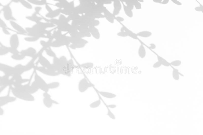 Gray shadow of the leaves on a white wall. Overlay effect for photo. Gray shadow of the leaves on a white wall. Abstract neutral nature concept blurred stock photo