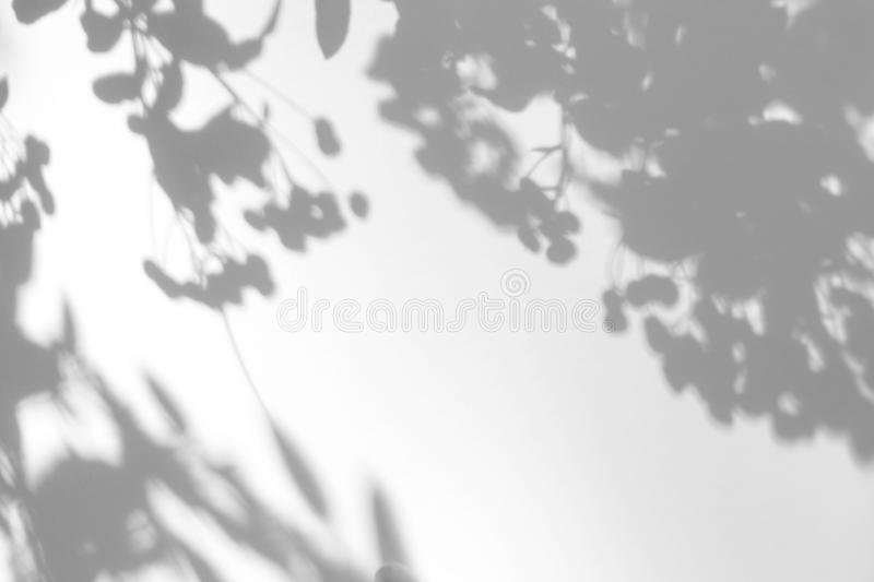 Gray shadow of the leaves on a white wall royalty free stock photography
