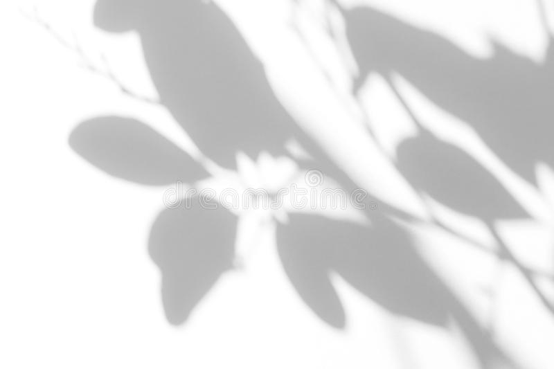 Gray shadow of the leaves on a white wall stock photography