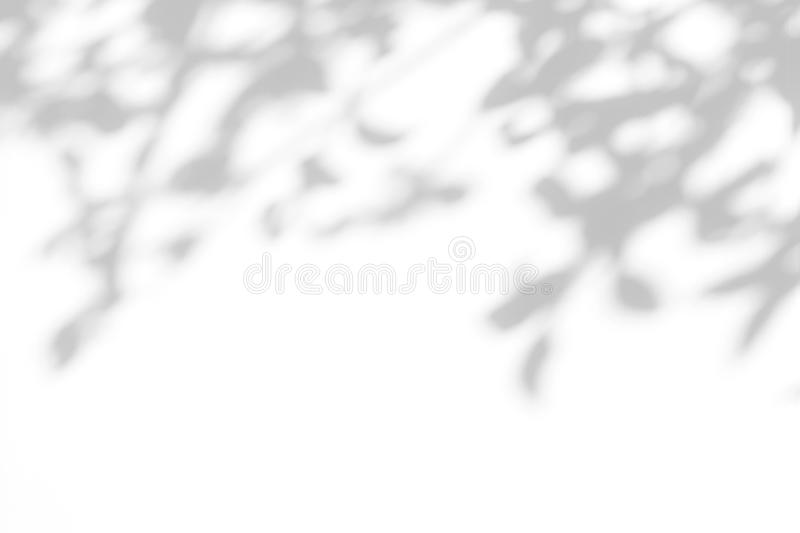 Gray shadow of the leaves on a white wall. Overlay effect for photo. Gray shadow of the leaves on a white wall. Abstract neutral nature concept blurred royalty free stock images